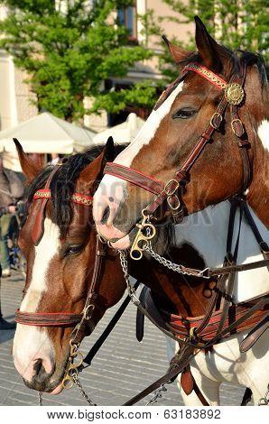 Two Head Horses