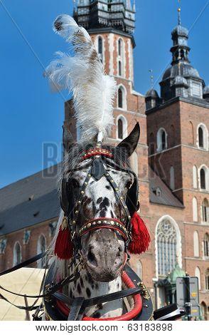 Dalmatian Horse In Cariage