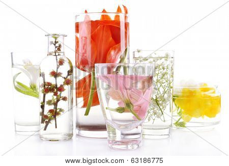 Spring flowers submerged in water isolated on white