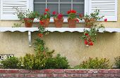 picture of front door  - Potted Plants in Front of Window Sill - JPG