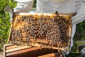 stock photo of beehive  - Beekeeper looking after bees and preparing for honey by maintaining the beehive - JPG