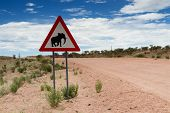 Elephant Crossing Sign On A Gravel Road
