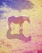 a pretty pony in a field done with a retro vintage instagram filter