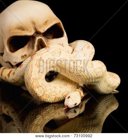 Spooky haloween image of a snake curling around a skull