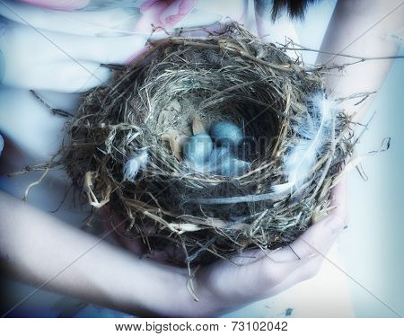 Close up of bird's nest in young woman's arms