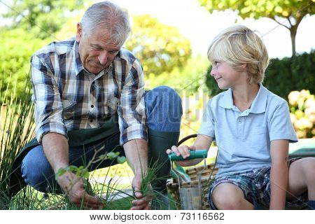 Grandpa with grandson gardening together in summer time