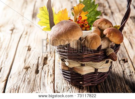 Ceps on wooden table, autumn harvest crop