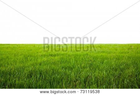 fields isolated on white background