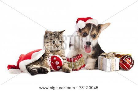 dog and cat and kitens wearing a santa hat