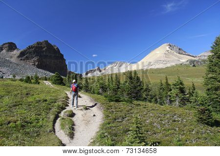 Hiking On An Alpine Trail - Jasper National Park, Canada
