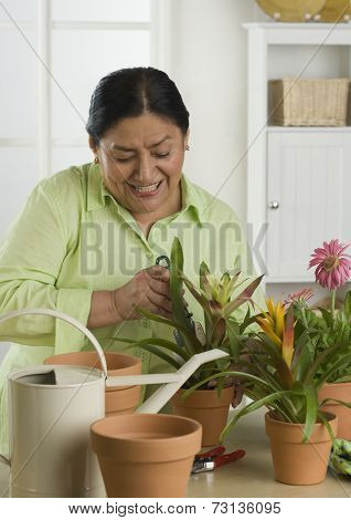Senior Hispanic woman gardening indoors