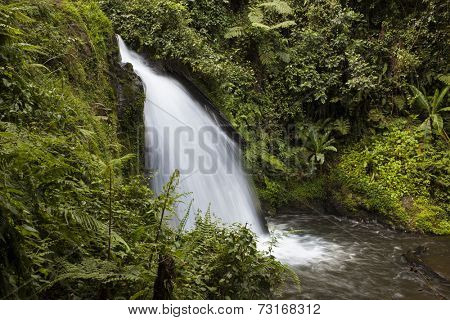 waterfall in the cloud forest on the slopes of Mt Kenya