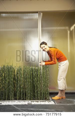 Asian woman pruning horsetail plants
