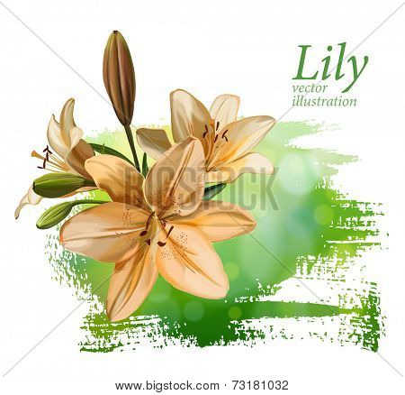 Lily flower on green background. Vector drawing / Eps10