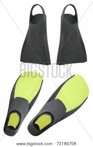 flippers under the colour background