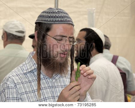 JERUSALEM, ISRAEL - SEPTEMBER 18, 2013: Young religious Jew with long sidelocks carefully chooses ritual plant - myrtle for Sukkot