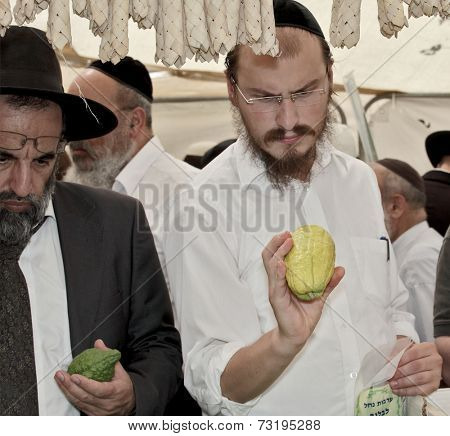 JERUSALEM, ISRAEL - SEPTEMBER 18, 2013: Traditional market before the holiday of Sukkot. The religious Jews with beard and glasses very carefully examines ritual citrus - etrog