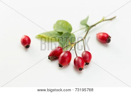 Rosehip (Rosa canina) and leaves