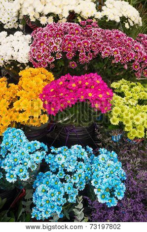 Flowers On A  Market Stall