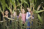 picture of pre-adolescent child  - Young girls in cornfield - JPG