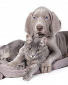 pic of mutts  - Dog and cat relaxing on white background - JPG