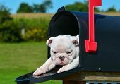 picture of mailbox  - puppy in a mailbox  - JPG