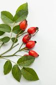 stock photo of wild-brier  - Rosehip  - JPG