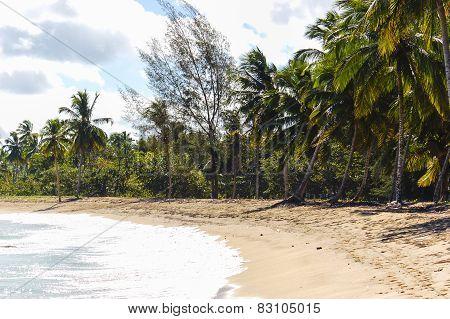 Seaview on a carribean beach