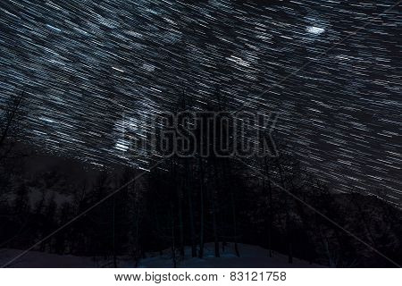 Star Trails Above Alpine Forest.
