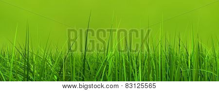 Concept or conceptual green, fresh and natural 3d grass field or lawn on green background in spring or summer banner