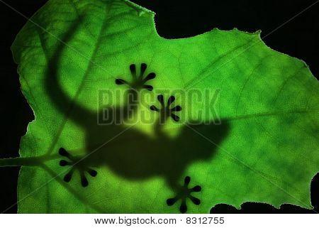 Lizard Silhouette In The Leaf