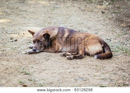 Thai Stay Dog