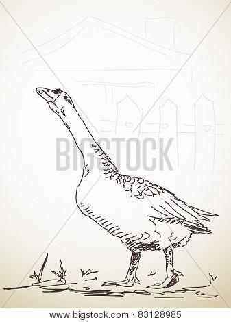 Goose attacks, Vector Sketch, Hand drawn illustration