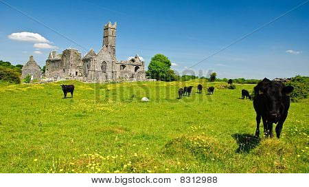 Scenic Irish Ancient Church Abbey Ruins Landscape