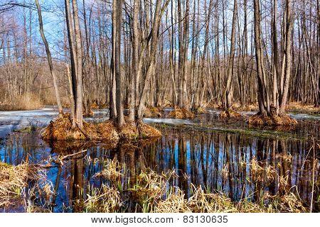 Nice spring day on bog in forest