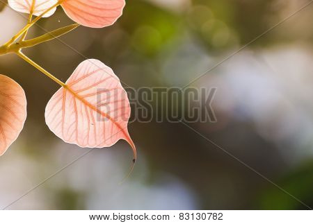 beautiful pink leaf background