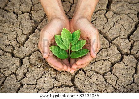 Love tree - save the world