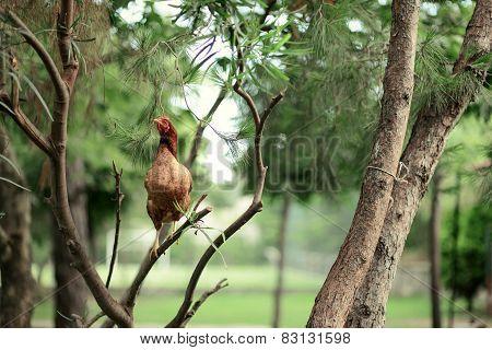 chicken on a tree