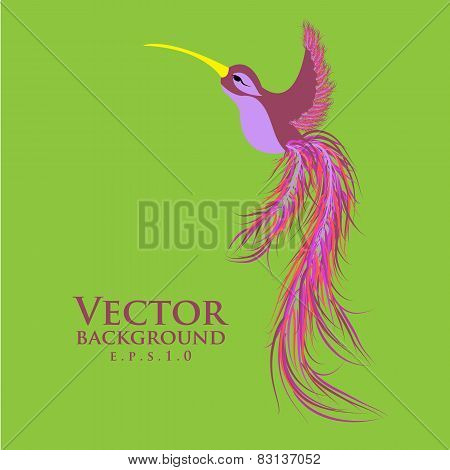 Vector colibri pink. Graceful hummingbird. Fashionable design ep
