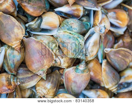 Freshwater clams mix  of local food in Thailand