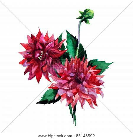 Dahlia Flowers Watercolor