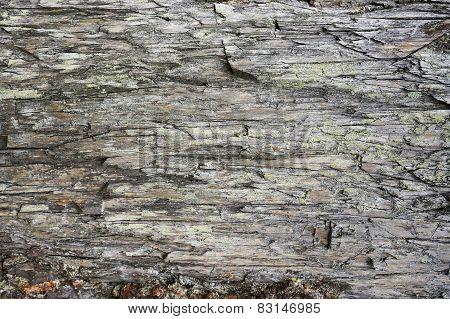 Rotten Pine Texture