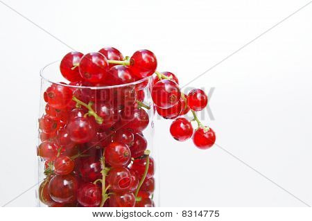 Fresh redcurrant in glass
