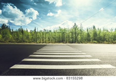 asphalt road in forest