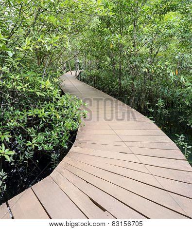 Wood Bridge In Mangrove Fores