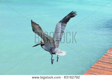 Pelican flying over the beautiful blue sea.