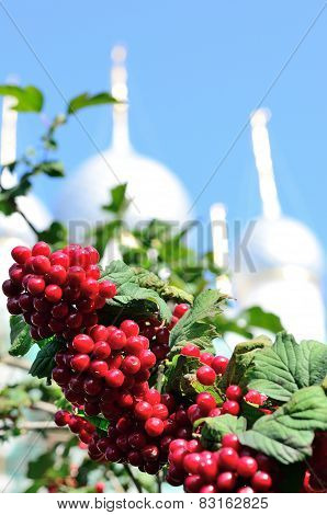 Nice branch with red berries with background of christian church.
