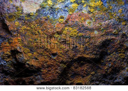 old cave wall with mold and moss
