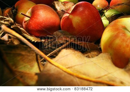 Collection Of Beautiful Apples