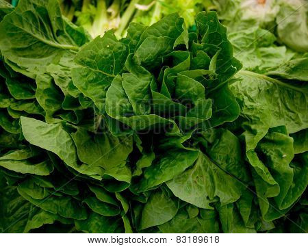 Close-up of fresh Chinese cabbage. Market.